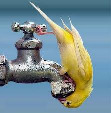 Give me water!!